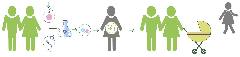 Как участвовать в программе суррогатного материнства